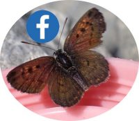 B5 Facebook logo